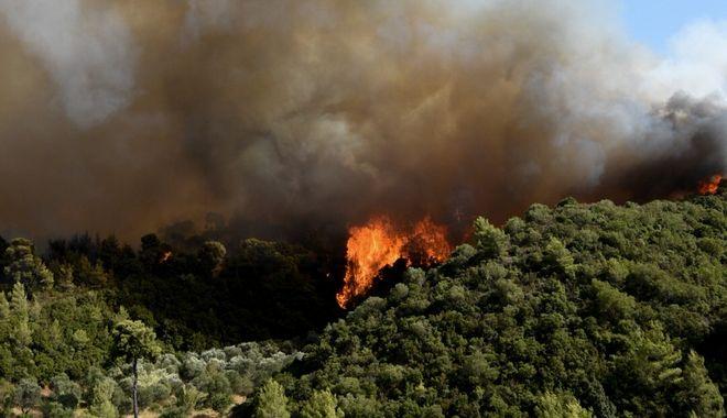 Πυρκαγιά στην περιοχή Λαμπίρη Αχαιας