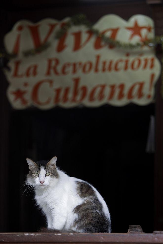 Μία γάτα στον πάγκο ενός ψιλικατζίδικου στην Αβάνα το οποίο έχει μία ταμπέλα που γράφει