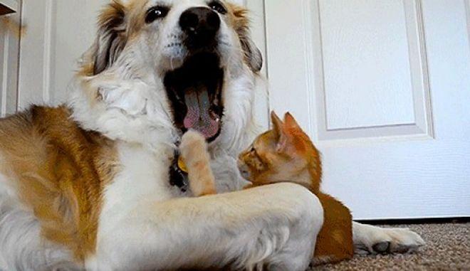 Η αιώνια μάχη; Γάτες εναντίον σκύλων. Δείτε 25 αστεία gifs