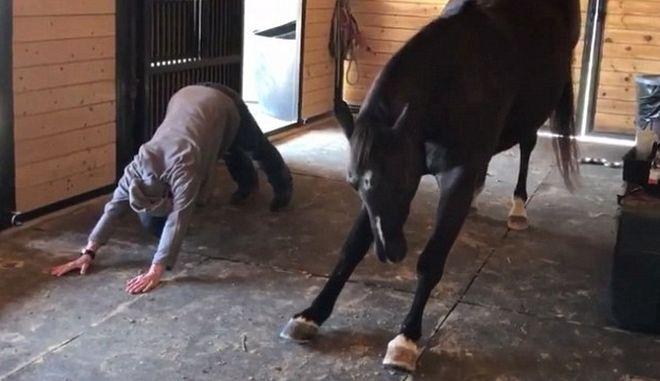 Κάνουν τα άλογα γιόγκα; Ιδού οι αποδείξεις