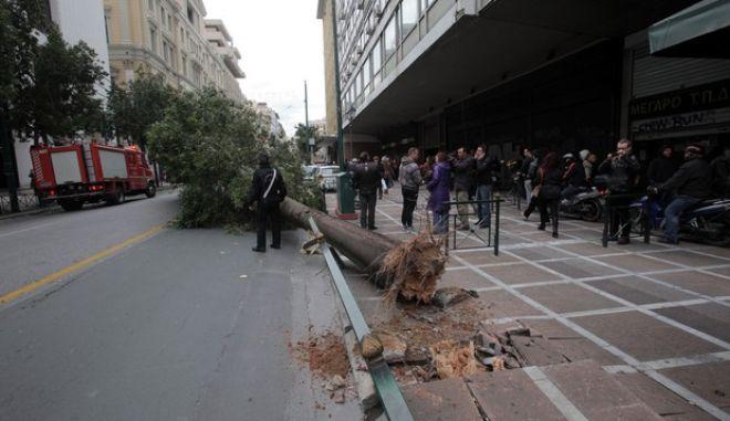 Πτώση δένδρου στην οδό Σταδίου από τους θυελλώδεις ανέμους την Τρίτη 3 Δεκεμβρίου 2013. (EUROKINISSI/ΚΩΣΤΑΣ ΚΑΤΩΜΕΡΗΣ)