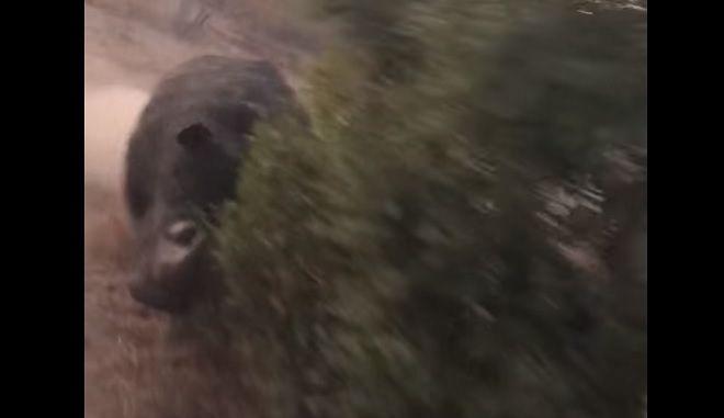 Πώς είναι να σε κυνηγάει ρινόκερος για δυο λεπτά