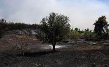 Αποτυπώνοντας την καταστροφή στον Κάλαμο: Η χαρτογράφηση των καμένων εκτάσεων