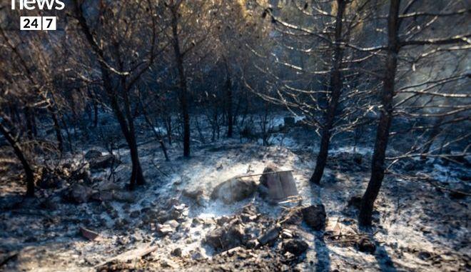 Στάχτη και αποκαΐδια ο Κάλαμος: Η εικόνα μετά τη φωτιά kalamos02c