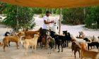 Άνοιξε το σπίτι του σε 300 σκυλιά για να τα σώσει από τυφώνα
