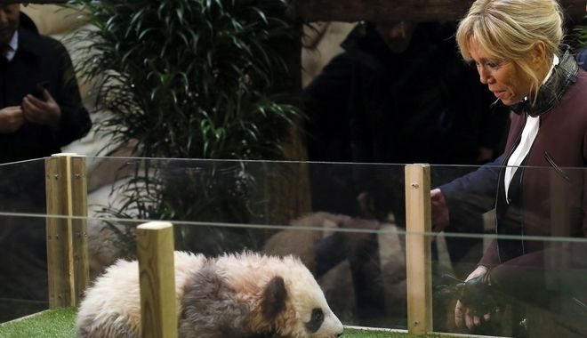 French First lady Brigitte Macron attends a naming ceremony of the panda born at the Beauval Zoo, in Saint-Aignan-sur-Cher, France, Monday, Dec. 4, 2017. The 4-month-old cub is called Yuan Meng, which means