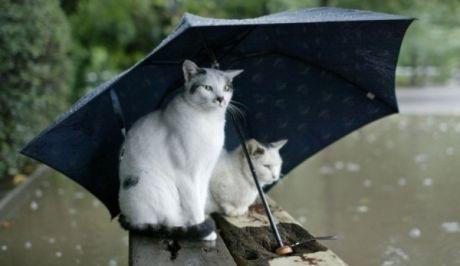 Bροχές και καταιγίδες σήμερα σε  όλη τη χώρα....