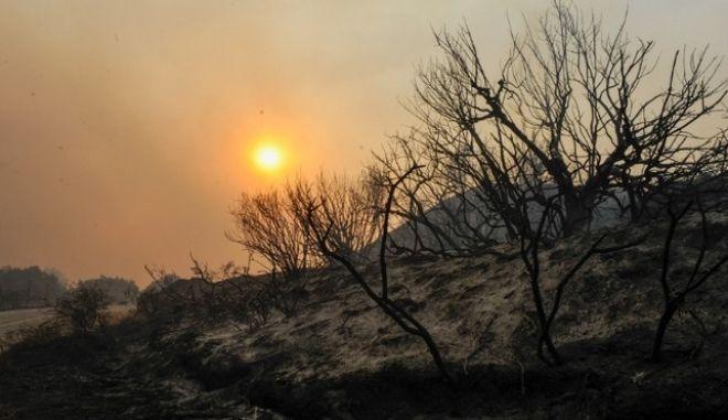 Μεγάλη φωτιά στη Ρόδο: Σε ύφεση τα μέτωπα - Προσπάθειες αποκατάστασης ηλεκτροδότησης
