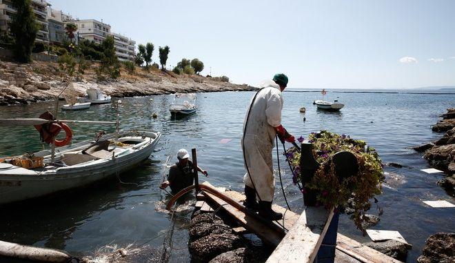 Συνεχίζονται οι εργασίες απορρύπανσης στην περιοχή της Πειραϊκής. Παρασκευή 22 Σεπτεμβρίου 2017. (EUROKINISSI / ΣΤΕΛΙΟΣ ΜΙΣΙΝΑΣ)