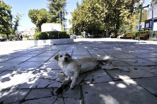 Αδέσποτος σκύλος κάθεται στη κεντρική πλατεία της πόλης των Τρικάλων το Σάββατο 23 Σεπτεμβρίου 2017. Την Παρασκευή άγνωστοι τοιχοκόλλησαν κηδειόχαρτα... προειδοποιώντας όσους ρίχνουν φόλες σε αδέσποτα σκυλιά της πόλης. Τα κηδειόχαρτα κολλήθηκαν επίσης και σε κεντρικούς δρόμους της πόλης. Την Πέμπτη υπήρξε νέο κρούσμα με θανάτωση 4 αδέσποτων σκύλων και 4 γατιών στην κεντρική πλατεία της πόλης από φόλες. (EUROKINISSI/ΘΑΝΑΣΗΣ ΚΑΛΛΙΑΡΑΣ)