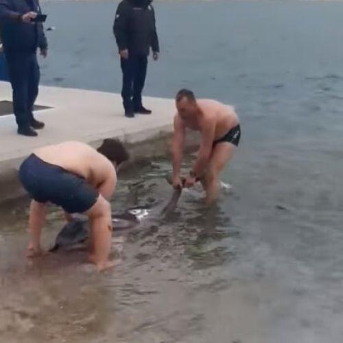 Βραβείο ανθρωπιάς: Επιχείρηση διάσωσης δελφινιού στην Καβάλα