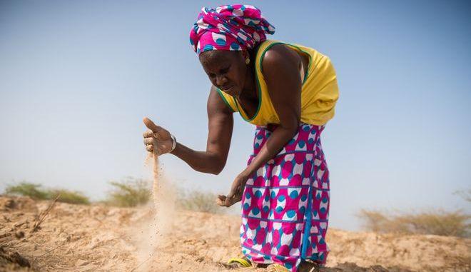 Γυναίκα σε καλλιέργεια ρυζιού στη Σενεγάλη