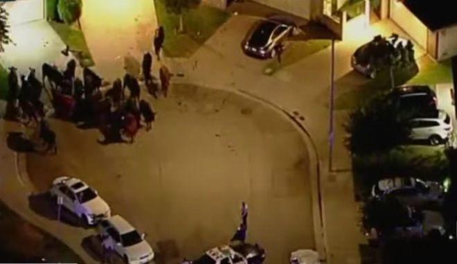 ΗΠΑ: 40 αγελάδες το 'σκασαν και περιφέρονταν ανέμελες στο Λος Άντζελες