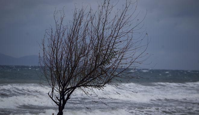 Στιγμιότυπο από το λιμάνι της Ραφήνας