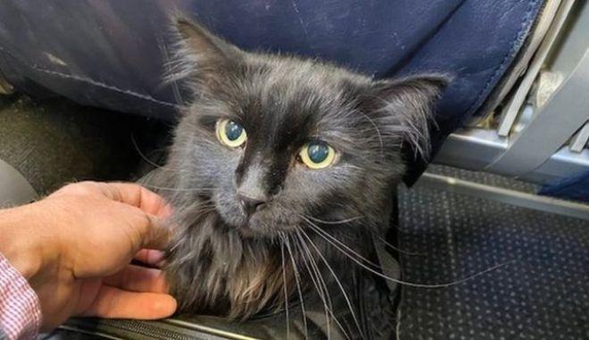 Γάτος που αγνοείτο πέντε χρόνια