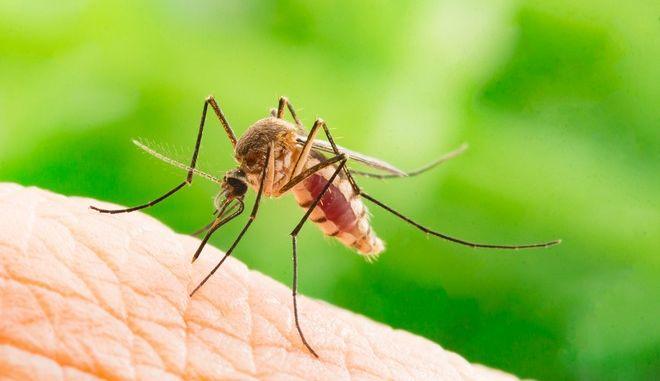 Από τον κήπο στο υπνοδωμάτιο: Πώς να προστατευτείτε από τα κουνούπια