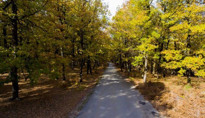 Σημείο αναφοράς για το δασικό πλούτο της ορεινής Ηλείας και γενικότερα της Ελλάδας, αποτελεί το περίφημο δρυοδάσος της Φολόης. Είναι μοναδικό όχι μόνο σε ομορφιά αλλά και ιδιαιτερότητα σε όλη την Ευρώπη το αυτοφυές αυτό δάσος, σπερμοφυούς μορφής με τις θεόρατες πλατύφυλλες βελανιδιές του.  Το δάσος αυτό βρίσκεται στο Οροπεδίο της Φολόης, στους νότιους πρόποδες της Οροσειράς του Ερυμάνθου και απέχει μόλις 25 χιλιόμετρα από την κοιτίδα του Ολυμπισμού, την Αρχαία Ολυμπία. Η οδική πρόσβαση στην περιοχή του δάσους γίνεται      από την πρωτεύουσα του Νομού Ηλείας, τον Πύργο, περνώντας από την Αρχαία Ολυμπία και τη Λάλα,     από την Τρίπολη, είτε μέσω Αρχαίας Ολυμπίας, είτε μέσω Δίβρης (αρτηρία 111) και Κούμανης     από την Πάτρα μέσω Πανόπουλου (αρτηρία 111), και Κούμανης.  Το δρυοδάσος της Φολόης εκτείνεται μέσα στις συλλεκτήριες λεκάνες των ποταμών Ερύμανθου η Ντοάνα ανατολικά, που αποτελεί και το φυσικό όριο μεταξύ Ηλείας και Αρκαδίας και του Ομηρικού ποταμού Σελλήεντα ή Ηλειακού Λάδωνα νοτιοδυτικά. Η έκταση που καλύπτει το δρυοδάσος Φολόης ανέρχεται στα 25.000 στρέμματα και ανήκει κατά απόλυτο νομή και κυριότητα στο ελληνικό Δημόσιο.