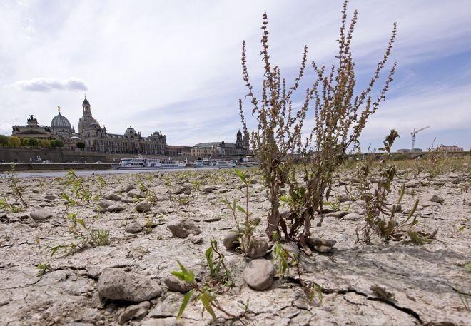 Ο ποταμός Έλβας εν μέσω ξηρασίας