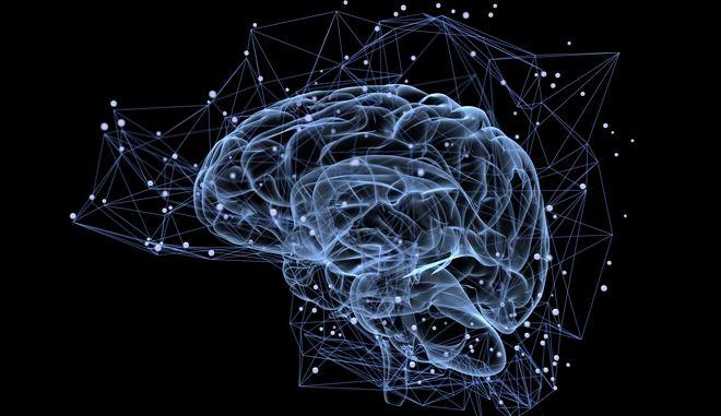 O ανθρώπινος εγκέφαλος