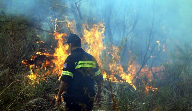 ΝΑΥΠΛΙΟ-Φωτιά από άγνωστη αιτία ξέσπασε το μεσημέρι της Πέμπτης στην παραλιακή οδό Ναυπλίου - Νέας Κίου κοντά στον Αγροτικό Συνεταιρισμό Αργολίδας ΡΕΑ . Έκαψε καλαμιές και λίγα δέντρα.(Eurokinissi-ΠΑΠΑΔΟΠΟΥΛΟΣ ΒΑΣΙΛΗΣ)