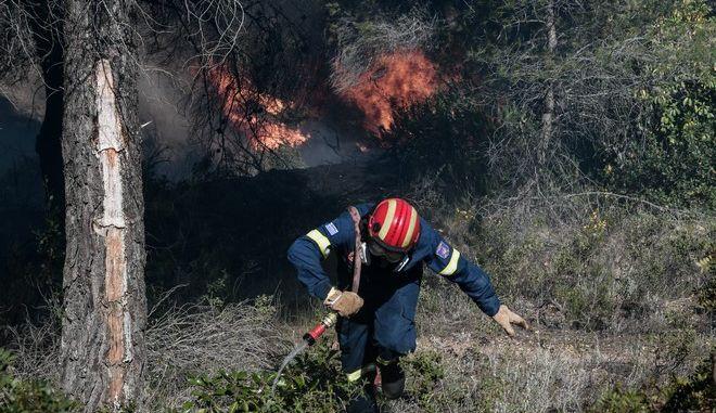 Πυροσβέστης σε δάσος (φωτογραφία αρχείου)