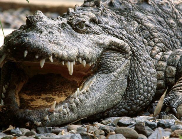 Τα 10 πιο θανατηφόρα ζώα