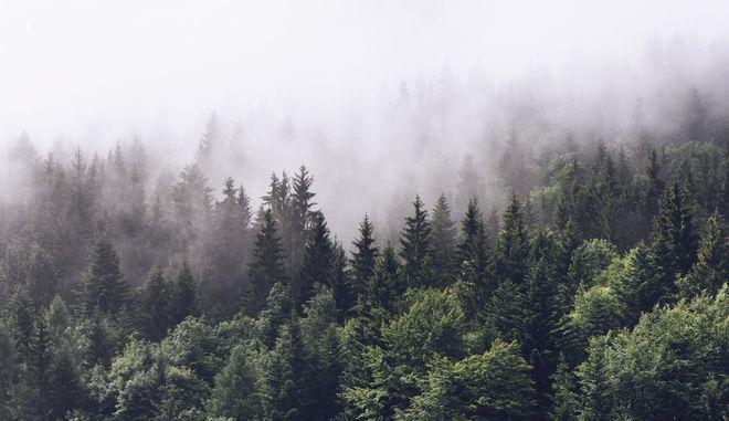 Δάσος. Φωτό αρχείου.