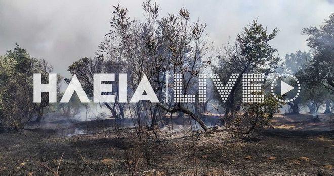 Φωτιές σε Άνδρο και Ηλεία: Εκκενώθηκε προληπτικά ένας μικρός οικισμός, σε ετοιμότητα άλλοι δύο