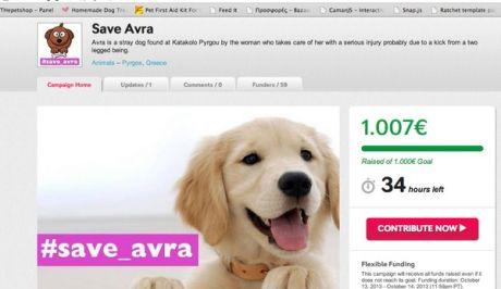 Συγκέντρωσαν 1.000 ευρώ για σκυλίτσα με σπασμένο σαγόνι μέσω Twitter