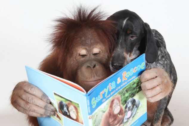 Suryia the Orangutan and Roscoe the dog at the book signing of the their book 'Suryia and Roscoe' at the Harbour Walk Bookstore, Georgetown, South Carolina. April 1st 2011. picture by barry bland