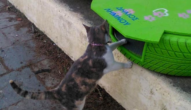 Λήμνος: Σπιτάκια για αδέσποτες γατούλες από λάστιχα αυτοκινήτου
