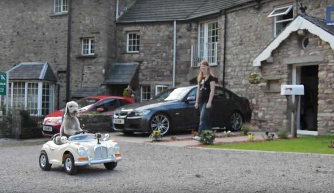 Βίντεο: Χαριτωμένος σκύλος οδηγεί μίνι Rolls-Royce