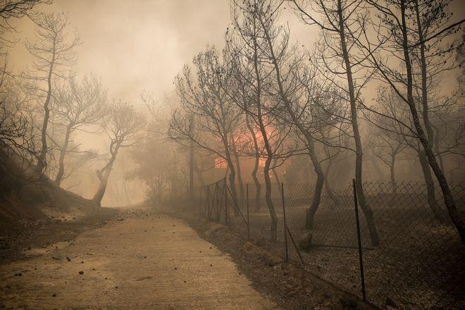 Η φωτιά κατέστρεψε σπίτια καθώς και δασική περιοχή.