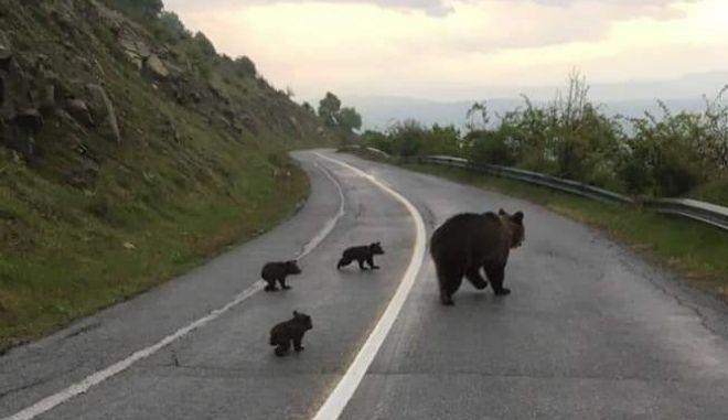 """""""Βιάσου έχουμε σχολείο"""" - Η βόλτα της οικογένειας αρκούδων έγινε viral"""