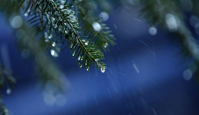 Σταγόνες βροχής πάνω στις βελόνες ενός ελάτου σε δάσος στο Κρυονέρι της λίμνης Πλαστήρα. (EUROKINISSI/ΘΑΝΑΣΗΣ ΚΑΛΛΙΑΡΑΣ)