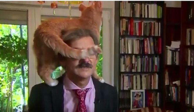 Γάτα παρεμβαίνει σε συνέντευξη ακαδημαϊκού