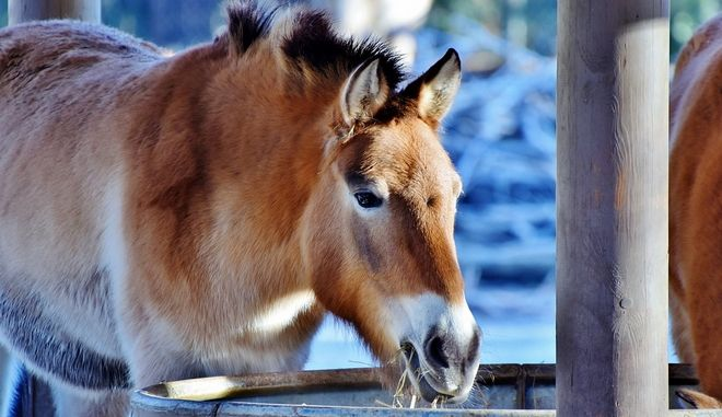 Τι προβλέπει ο νόμος για τα άλογα και τα γαϊδούρια εργασίας