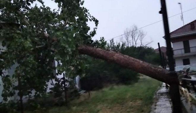 Προβλήματα από την κακοκαιρία: Χαλάζι στη Β. Ελλάδα- Δέντρο έπεσε σε σπίτι