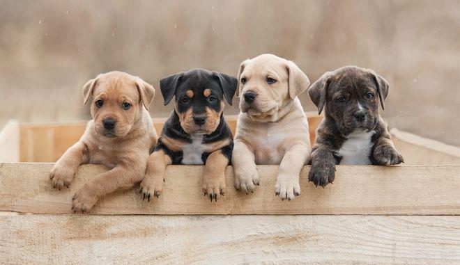 Τελικά πόσα είναι τα ανθρώπινα χρόνια ενός σκύλου;