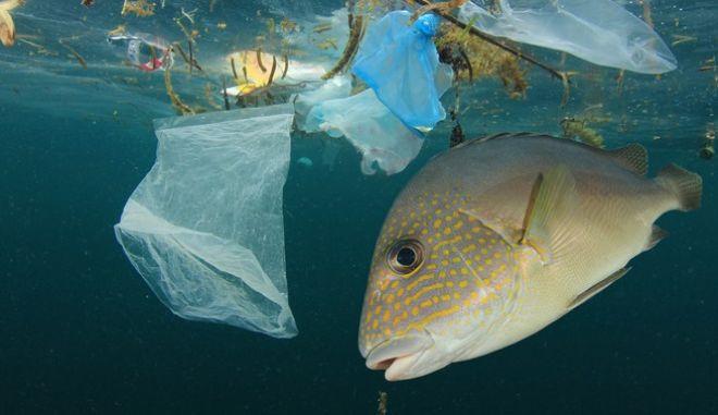 Ρύπανση των υδάτων
