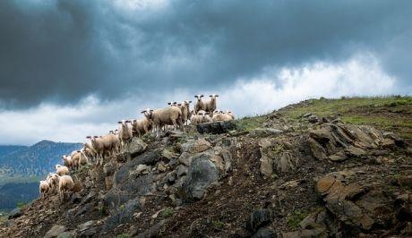 Τι αλλάζει στην κτηνοτροφία – Αναλυτικά το σχέδιο νόμου του ΥΠΑΑΤ