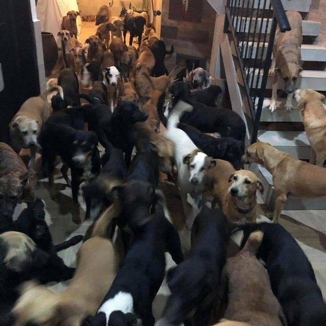 Ένας Μεξικανός φιλοξενεί 300 σκύλους και τους σώζει από την κακοκαιρία