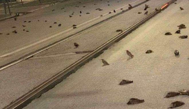 Νεκρά πουλιά στη Ρώμη