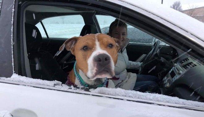 Ο σκύλος κατά το ταξίδι της επιστροφής