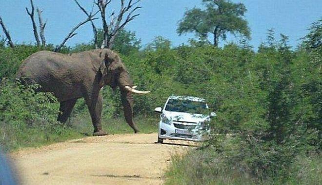 Ελέφαντας εμβολίζει και αναποδογυρίζει ένα Hyundai Atos
