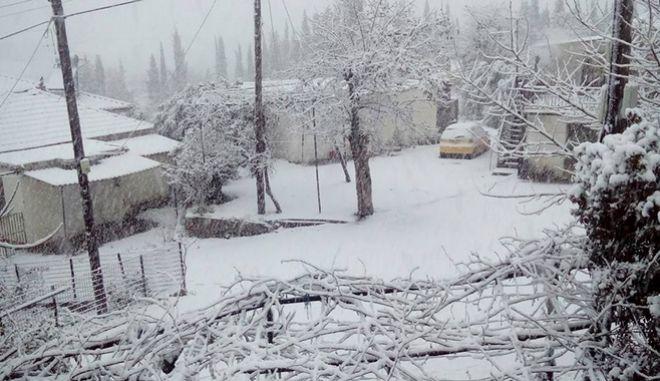 Χιόνια παντού. Πρωτόγνωρες θερμοκρασίες στην Κεντρική Ελλάδα, κυκλοφορία με προβλήματα