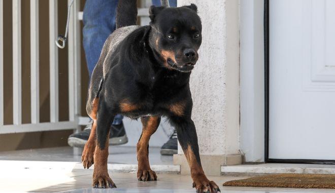 Σκυλί επιτέθηκε και σκότωσε κοριτσάκι 3 μηνών στα Γλυκά Νερά