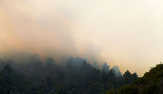 Φωτιά σε δασική έκταση - Φωτογραφία αρχείου