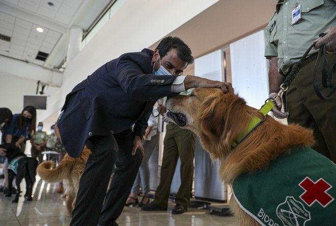Χιλή: Σκυλιά μυρίζουν τον κορονοϊό στους επιβάτες που ταξιδεύουν