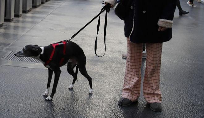 Γυναίκα κρατά έναν σκύλο